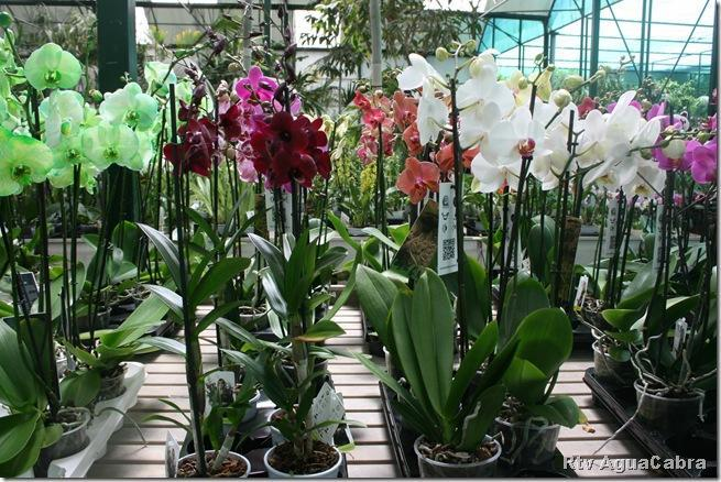 Rtv aguacabra for Vivero plantas exoticas